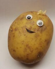 Jenky spud potato